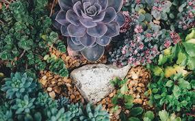 Regional Plants
