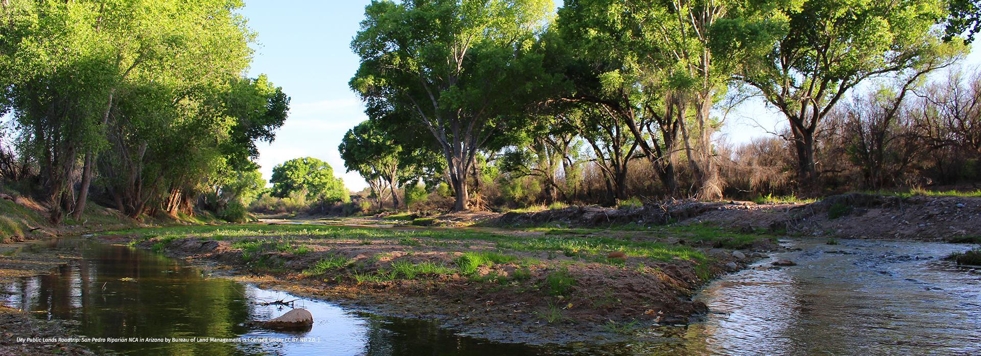 (My Public Lands Roadtrip: San Pedro Riparian NCA in Arizona by Bureau of Land Management is licensed under CC BY-ND 2.0. )