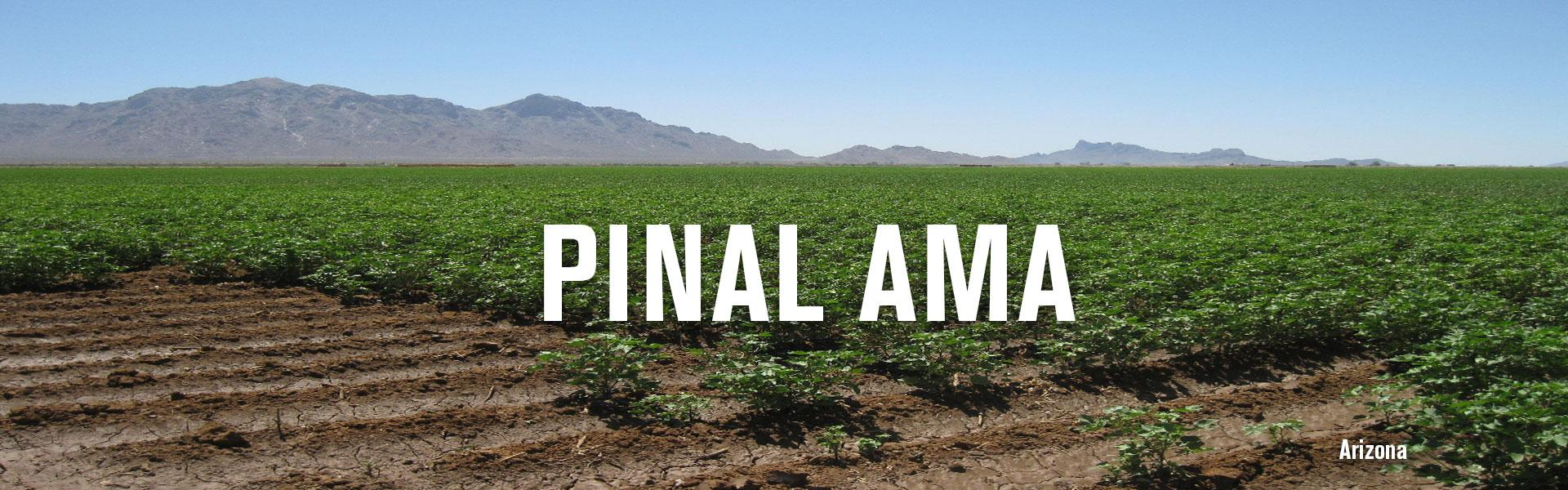 Pinal Active Management Area